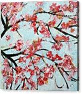 Cherry Blossoms V 201631 Acrylic Print