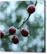 Cherry Constellation  Acrylic Print