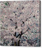 Cherry Pink Acrylic Print