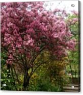 Cherry Spring Blossom Acrylic Print by Valia Bradshaw