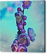 Cherry Stems Acrylic Print