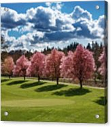 Cherry Tree Bloom Color Acrylic Print