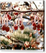 Cherry Tree In Winter Acrylic Print