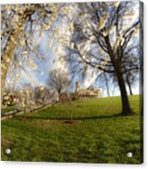 Cherry Trees In Bloom In Nashville Acrylic Print