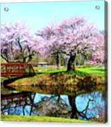 Cherry Trees In The Park Acrylic Print