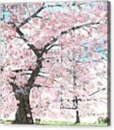 Cherry Trees Acrylic Print by Patrick Grills