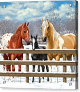 Chestnut Appaloosa Palomino Pinto Black Foal Horses In Snow Acrylic Print by Crista Forest