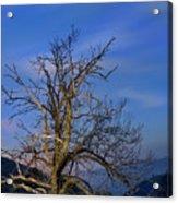 Centenary Chestnut At Blue Hour Acrylic Print