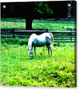 Chestnut Hill Horse Acrylic Print