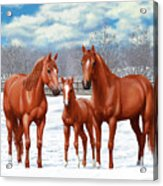 Chestnut Horses In Winter Pasture Acrylic Print by Crista Forest