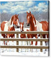 Chestnut Paint Horses In Snow Acrylic Print by Crista Forest