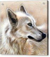 Cheyenne Acrylic Print