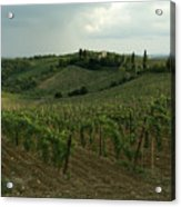 Chianti Vineyards In Tuscany Acrylic Print