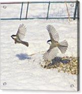 Chickadee-6 Acrylic Print by Robert Pearson