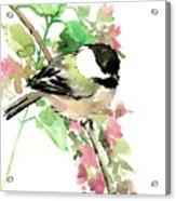 Chickadee And Spring Blossom Acrylic Print
