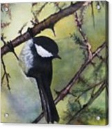 Chickadee Autumn Acrylic Print