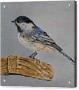 Chickadee Bird Acrylic Print