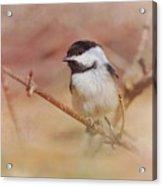 Chickadee In Spring Acrylic Print