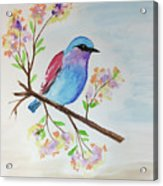 Chickadee On A Branch Acrylic Print
