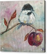 Chickadee On An Apple Tree Acrylic Print