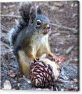 Chickaree Stripping A Pine Cone - John Muir Trail Acrylic Print