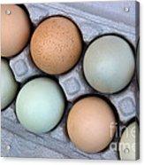 Chicken Eggs In Carton Acrylic Print