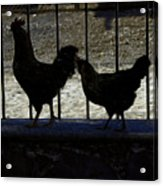 Chicken In Silhousette Acrylic Print