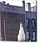 Chicken Little In Manhattan Acrylic Print
