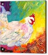 Chicken Scratch Acrylic Print
