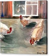Chickens In The Barnyard Acrylic Print