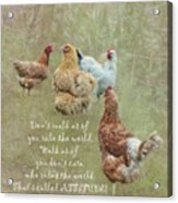 Chickens With Attitude  Acrylic Print
