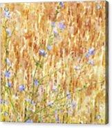 Chickory N Wheat W C Acrylic Print