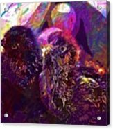 Chicks Hatched Fluffy Young Animal  Acrylic Print