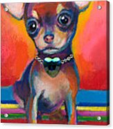 Chihuahua Dog Portrait Acrylic Print by Svetlana Novikova