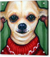 Chihuahua In Red Sweater - Boss Dog Acrylic Print