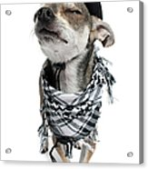 Chihuahua Wearing A Scarf And A Cowboy Hat Acrylic Print