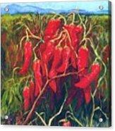 Chile Field Acrylic Print