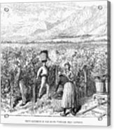 Chile: Wine Harvest, 1889 Acrylic Print