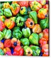 Chili Pepper Fest Acrylic Print