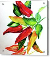 Chillies From My Garden Acrylic Print by Karin  Dawn Kelshall- Best