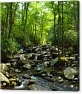 Chimney Tops Trail Acrylic Print
