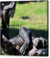 Chimp Sunbathing Acrylic Print