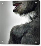 Chimpanzee Profile Vignetee Effect Acrylic Print