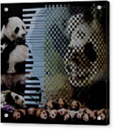 China's Rebirth Of The Mighty Panda Acrylic Print