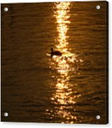 Chincoteague Bay Sunset Acrylic Print