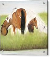 Chincoteague Ponies Acrylic Print