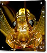 Chinese Cave House Centipede Acrylic Print