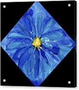 Chinese Chrysanthemum Acrylic Print