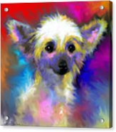 Chinese Crested Dog Puppy Painting Print Acrylic Print
