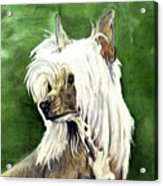 Chinese Crested Acrylic Print